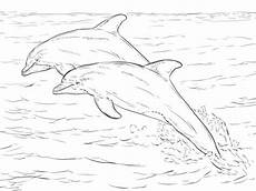 spinner dolphin drawing at getdrawings free