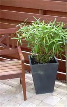bambou utilisation au jardin