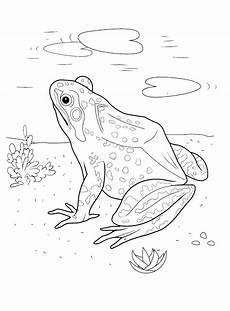 malvorlagen frosch im see