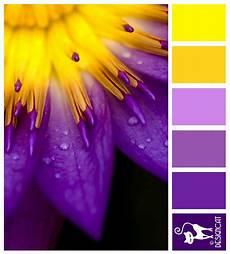 purple yellow burst purple lilac yellow designcat colour inspiration pallet color my