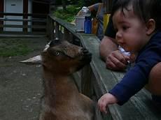 animal worksheets in 13905 binghamton zoo at ross park binghamton ny kid friendly activit trekaroo