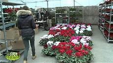 fiori vendita vendita fiori all ingrosso mercato dei fiori andamento