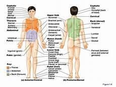 Pengantar Ilmu Anatomi