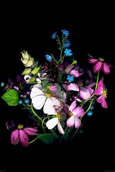 flower wallpaper iphone se freeios7 ad16 wallpaper apple ios8 iphone6 flower