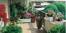 piante fiorite da terrazzo piante da vaso sempreverdi per esterno con piante da