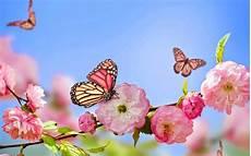 Fruhling Schmetterlinge Und Blumen Hd Hintergrundbilder
