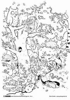 Malvorlagen Tiere Des Waldes Als Pdf Natur Wald Tiere Guckes
