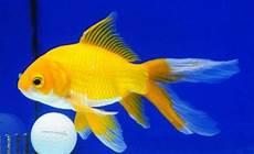 Terbaru 12 Gambar Warna Ikan Gani Gambar
