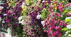 blumen fur balkon viel sonne my flowers