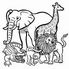 Ausmalbilder Tiere Afrika Clipart Animals Lineart