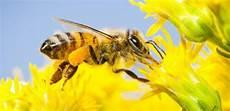 Ini 10 Fakta Menarik Tentang Lebah Madu Yang Harus Kamu