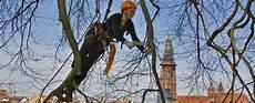 Baumpflege Baumpflege Treeo