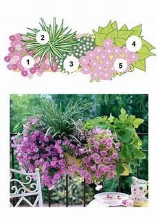 blumenkasten bepflanzen ideen bilder balkonblumen fantasievoll kombiniert balconies gardens