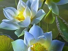 samsung j7 prime flower wallpaper hd lotus flower wallpaper for samsung galaxy j7 prime