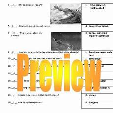 eyewitness video worksheet reptiles by life in the middle debcouture