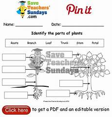 plants worksheets for primary 13486 label parts of a plant and parts of a tree worksheet go to http www saveteacherssundays