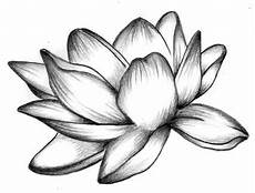 disegni di fiori a matita fiore di loto disegno cerca con idee disegni