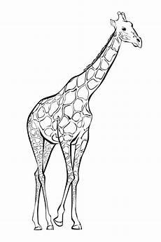 Malvorlagen Giraffen Gratis Mandala Giraffe Zum Ausdrucken Best Image Giraffe In The