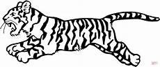 tiger ausmalbilder malvorlagen 100 kostenlos