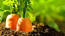 gardening 101 what to and what to grow the