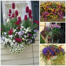 fioriere per davanzale finestra fioriere da balcone come valorizzare piante e fiori in