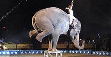 Ausmalbilder Zirkus Elefant Persuasive Essay Intro Paragraph Colleen Tygh S