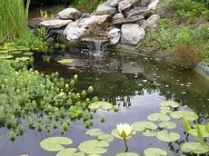 zoom les plantes aquatiques