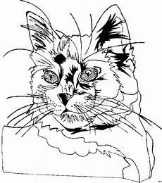 Malvorlagen Katzenkopf Katzenkopf Lange Schnurhaare Ausmalbild Malvorlage Katzen