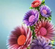Beautiful Flower Wallpaper Zedge by Beautiful Flowers Zedge Wallpaper