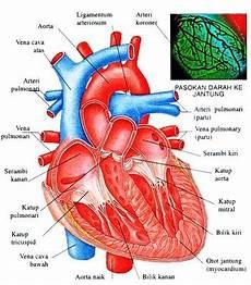 Anatomi Fisiologi Jantung Be Health Inside And Outside