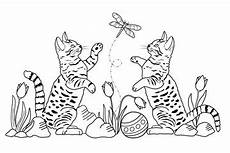 Ausmalbilder Katzenkinder Bilder Und Suchen Malbild