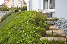 Steile Böschung Bepflanzen - bodendecker am laufenden meter gartentechnik de