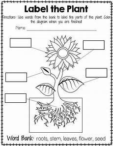 plant labeling worksheet free teaching plants science