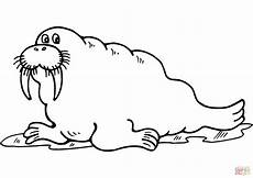 cartoon walrus coloring page free printable coloring pages