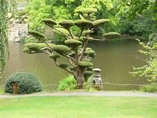 Quel Arbre Jardin Japonais