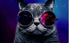 Katze Mit Sonnenbrille - cat wearing sunglasses wallpaper high with glasses litle