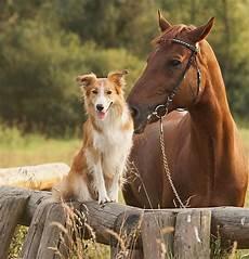 Malvorlage Pferd Und Hund Cofix Kombi Kit Pferd Hund