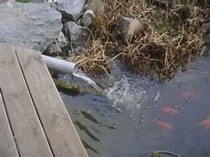 Was Ist Ein Teich - heuft tonnenfilter