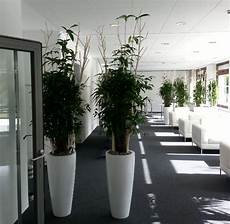 benjamin pflanze pflege ficus benjamin kunstpflanze k