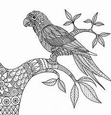 ausmalbilder f 252 r erwachsene papageien zum ausdrucken