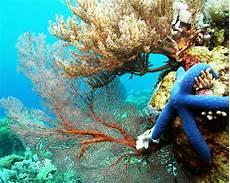 Lokasi Dan Harga Tiket Masuk Taman Laut Bunaken Pesona