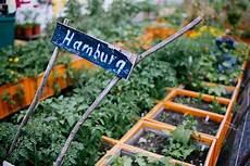 gardening hamburg gardening quot wir m 252 ssen auf die d 228 cher gehen quot fink