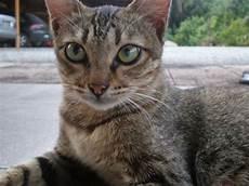 Fatin Rahmat Koleksi Gambar Kucing Kucing Kak Tin