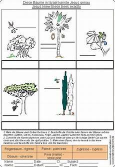 Ausmalbilder Umwelt Jesu B 228 Ume In Israel Trees In Israel Jesus Kennt Sie