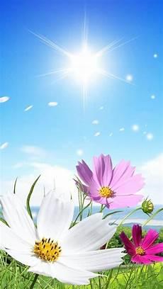 Beautiful Flower Wallpaper Zedge by Flowers Sky Wallpaper By Dathys 6a Free On