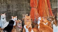 Kehidupan Kucing Jalanan Di Seluruh Dunia 8 Gambar The