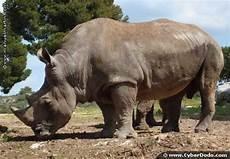 Persebaran Fauna Di Indonesia Geographyeducation