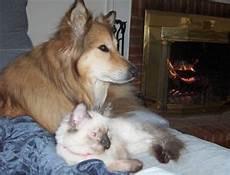des jeux de grattage avec des chiens et des chats