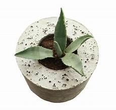 blumentopf aus beton werkstatt officina04 blumentopf aus beton vaso di cemento