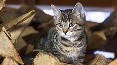 darf vermieter katze verbieten tierischer mitbewohner vom arzt empfohlene katze darf bleiben